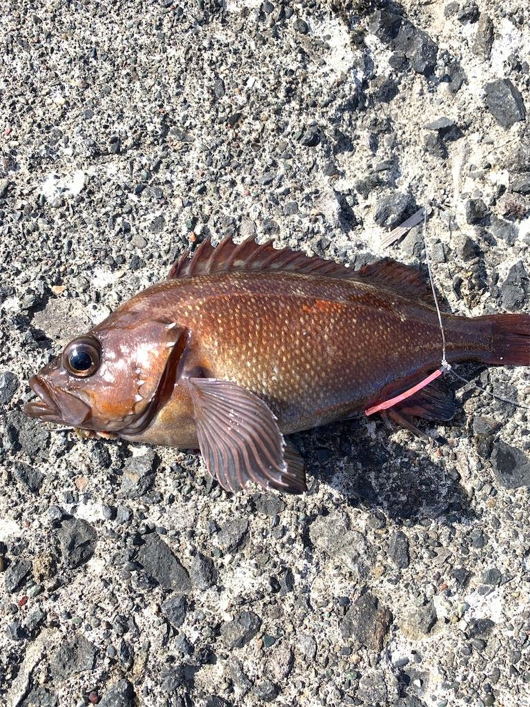 f:id:FishingLife:20200613094437j:image
