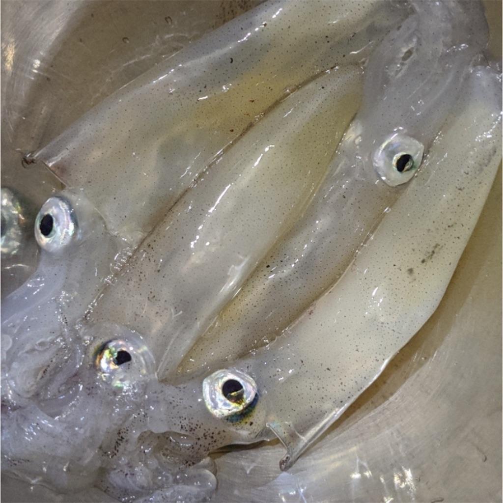 北海道 釣り 情報
