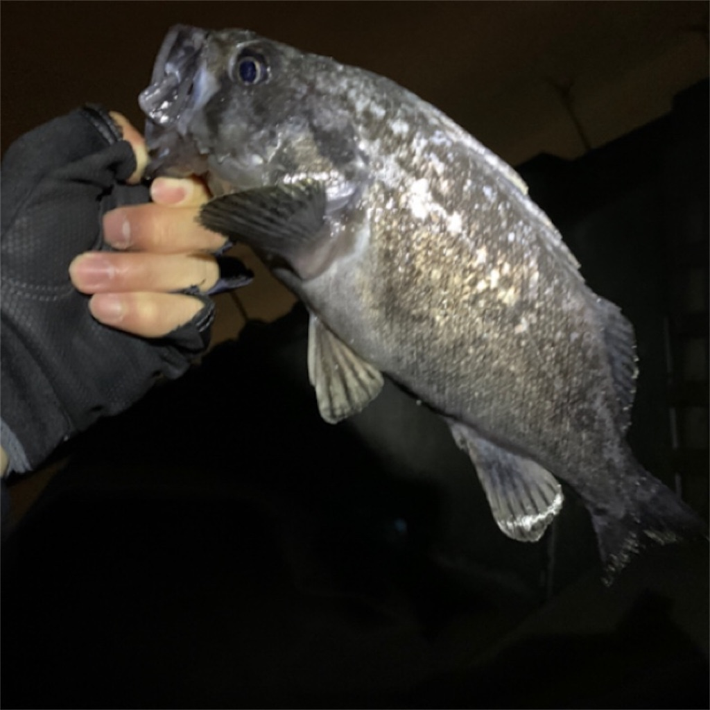 f:id:FishingLife:20200705210719j:plain