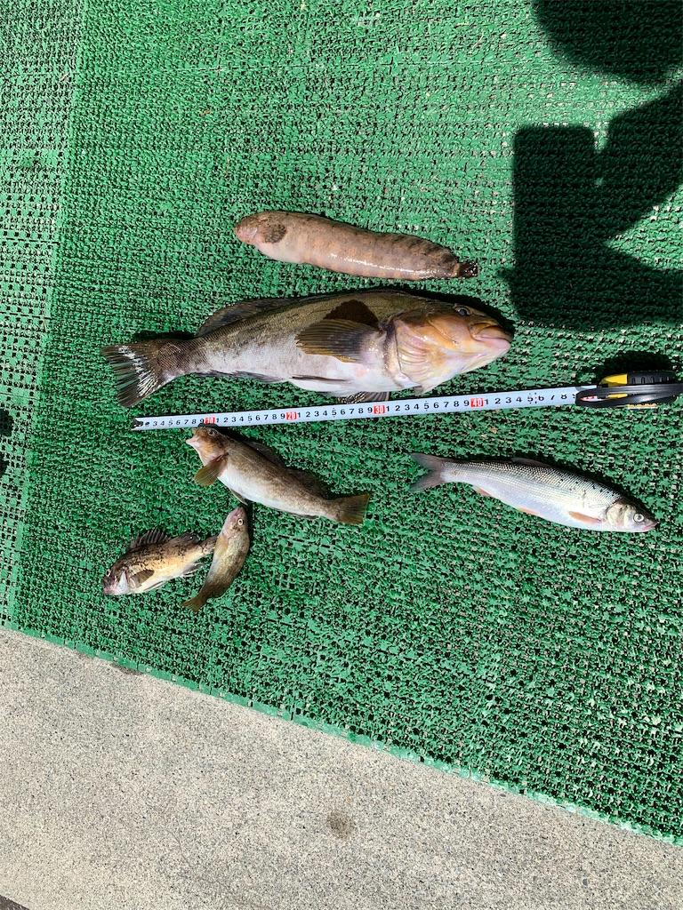 f:id:FishingLife:20200722202528j:plain