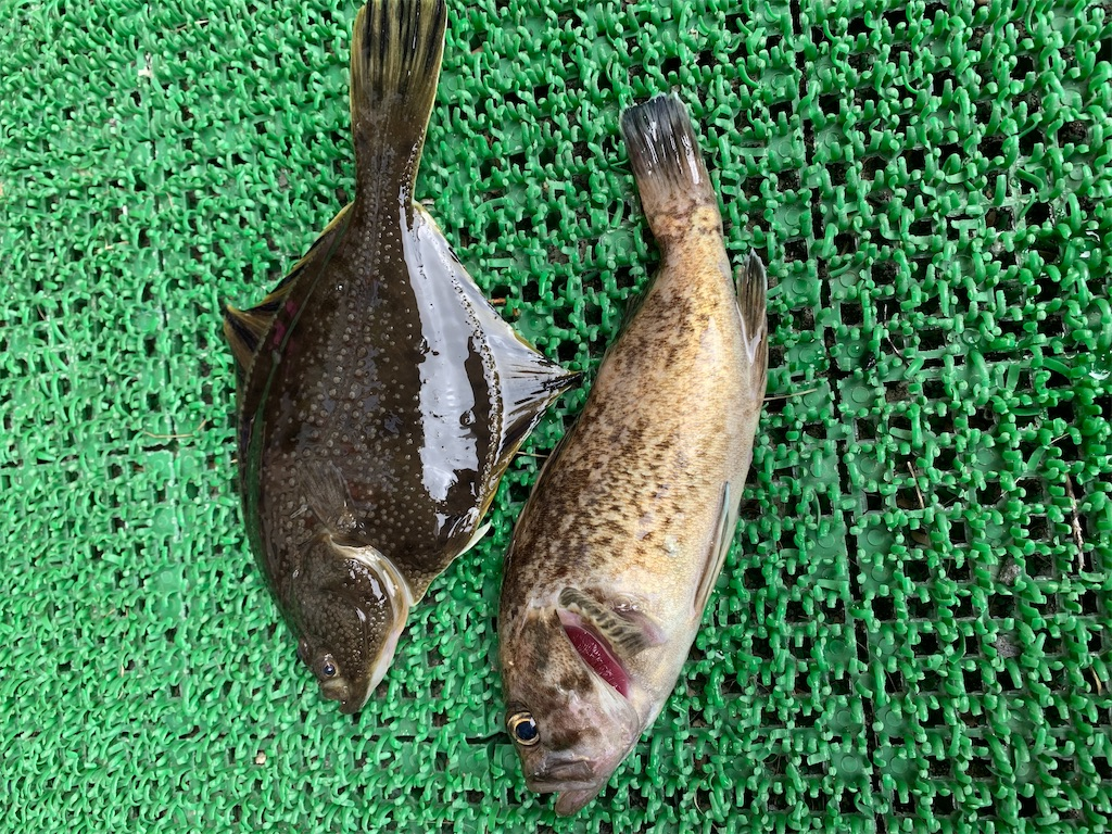 f:id:FishingLife:20200729102826j:image