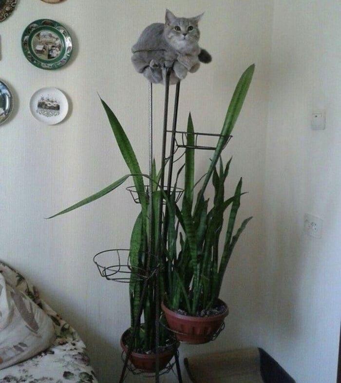 f:id:Florist87:20210527131628j:plain
