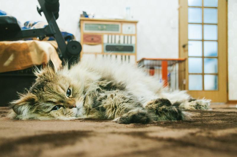 猫 の お腹 の たるみ