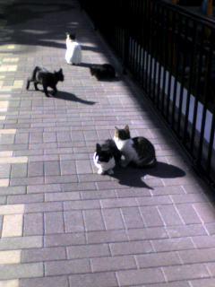 f:id:Fuetaro:20060126125351j:image
