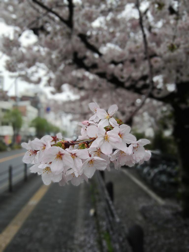 f:id:Fujiko:20190204180346j:plain