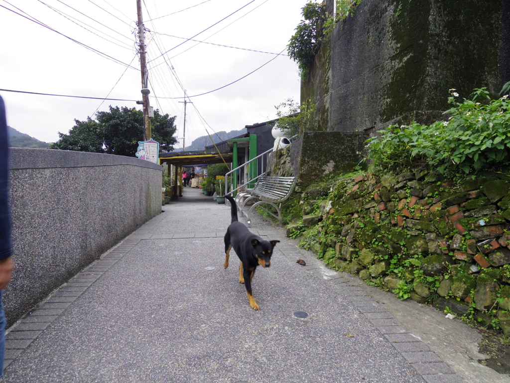 f:id:Fukuneko:20170305003646j:plain