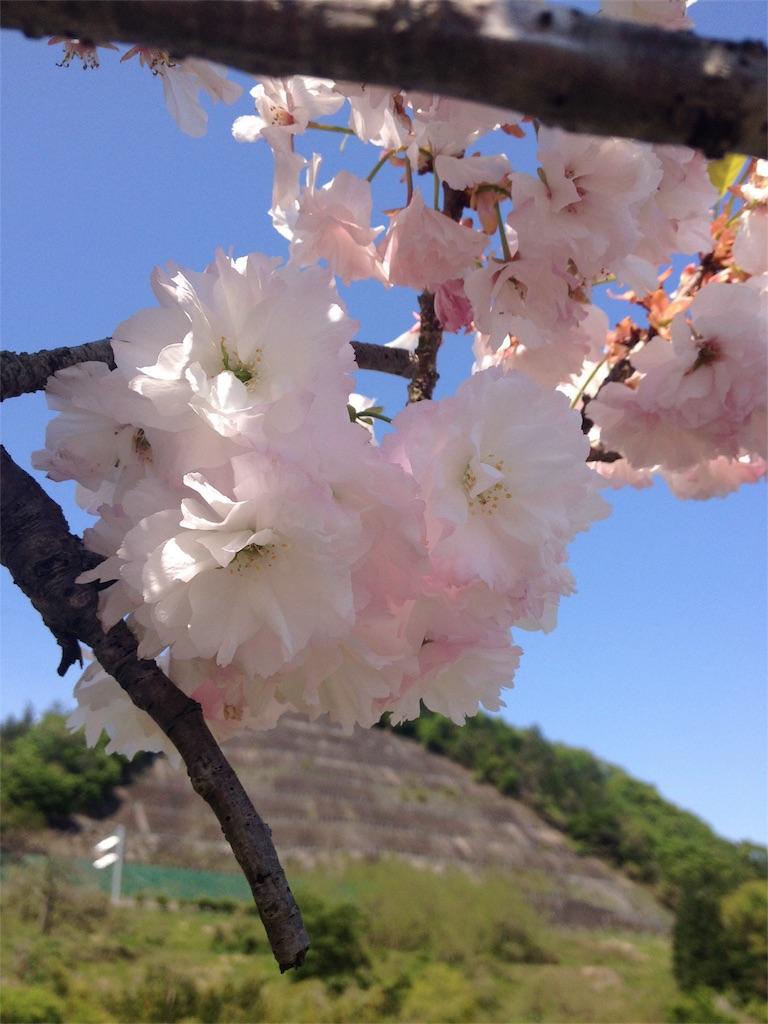 f:id:Fukuneko:20170421065558j:image