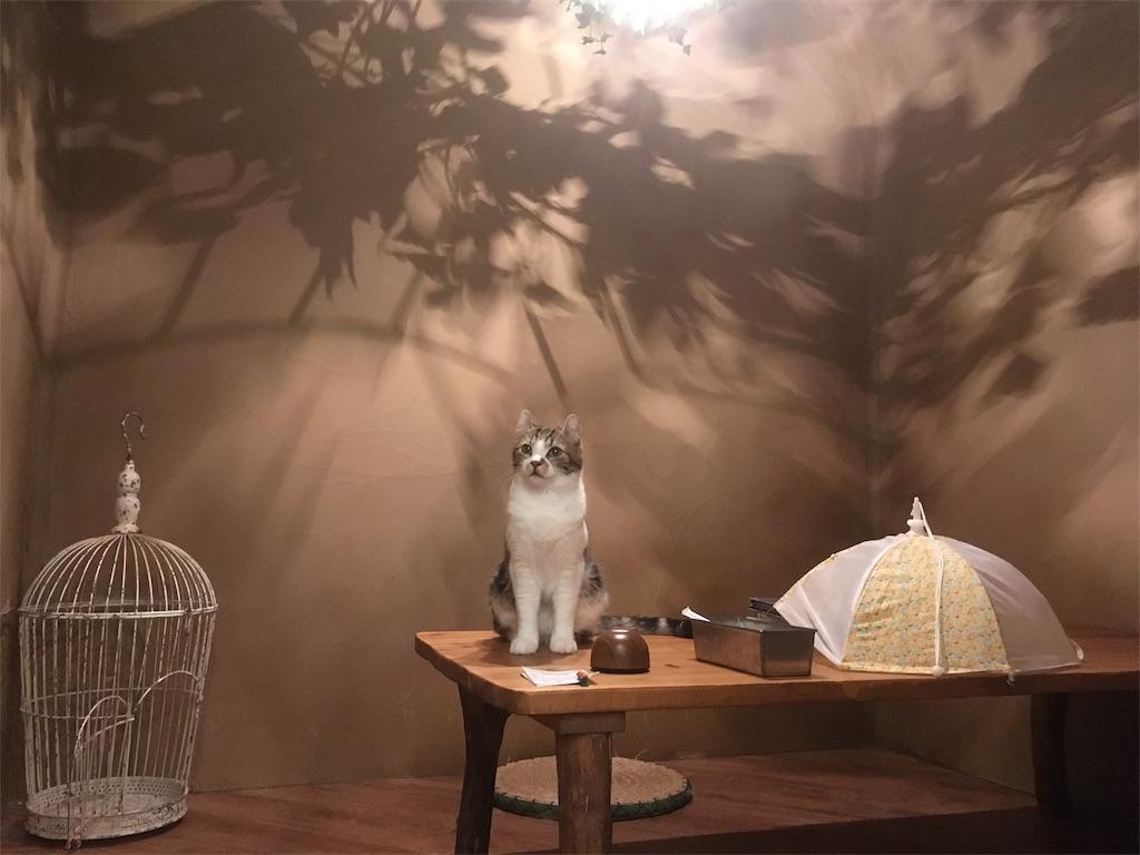 f:id:Fukuneko:20170607173208j:image
