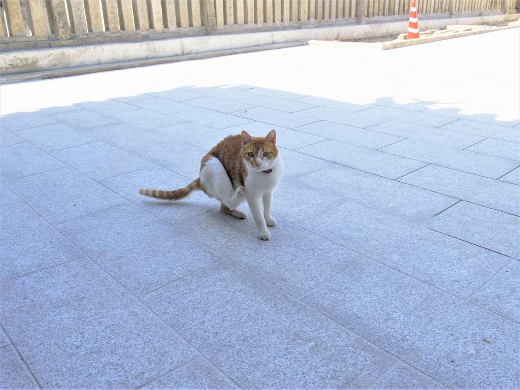 f:id:Fukuneko:20170618150557j:plain