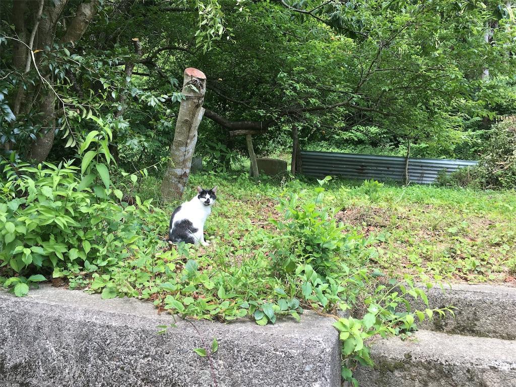f:id:Fukuneko:20170619072035j:image