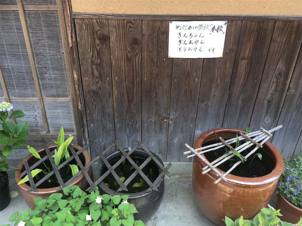 f:id:Fukuneko:20170619072946j:image