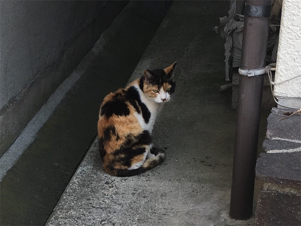 f:id:Fukuneko:20170619073304j:image