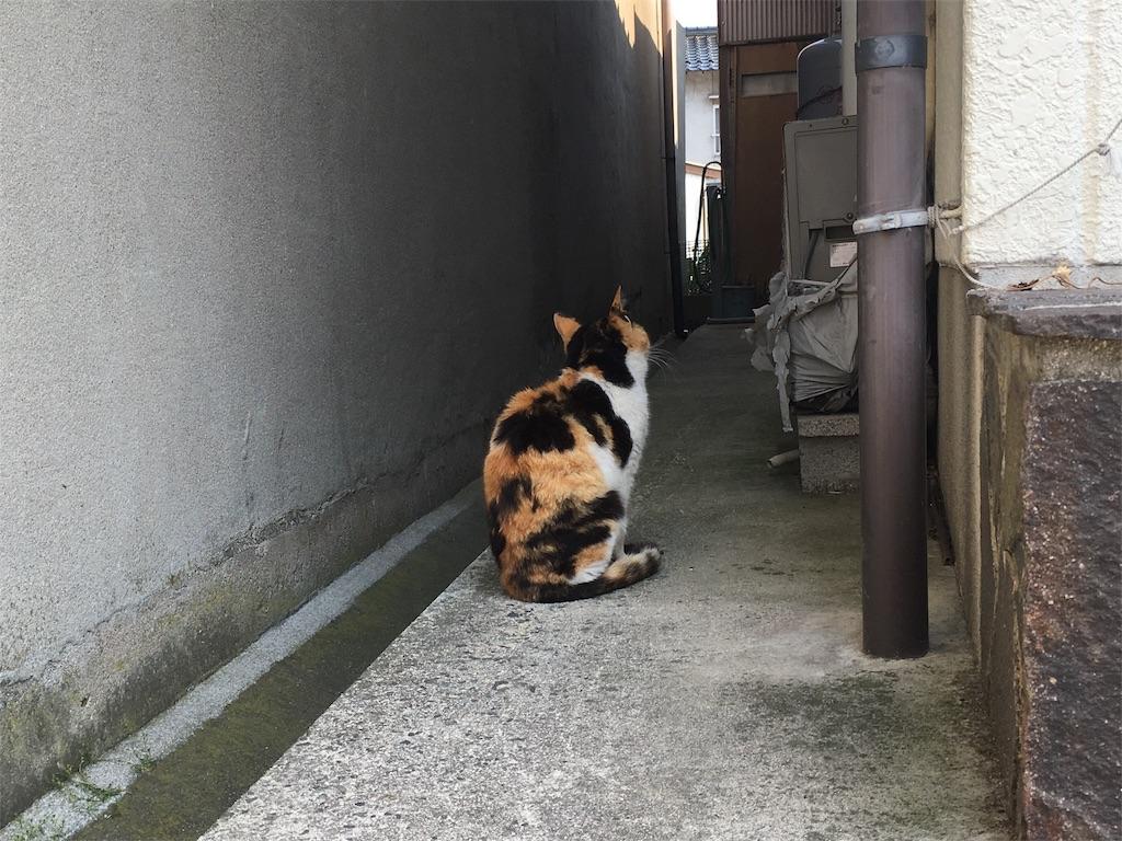 f:id:Fukuneko:20170619073306j:image