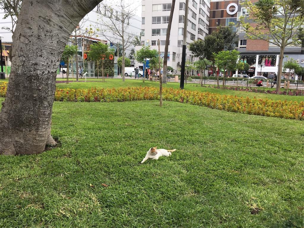f:id:Fukuneko:20171211131126j:image
