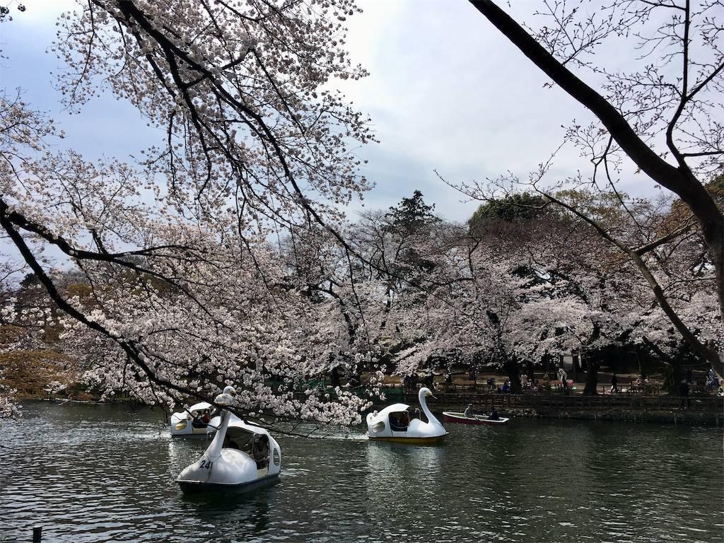 f:id:Fukuneko:20190328144154j:image