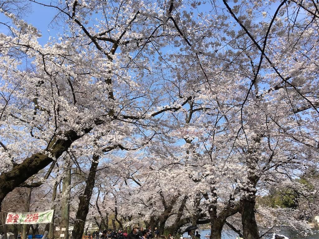 f:id:Fukuneko:20190328144534j:image