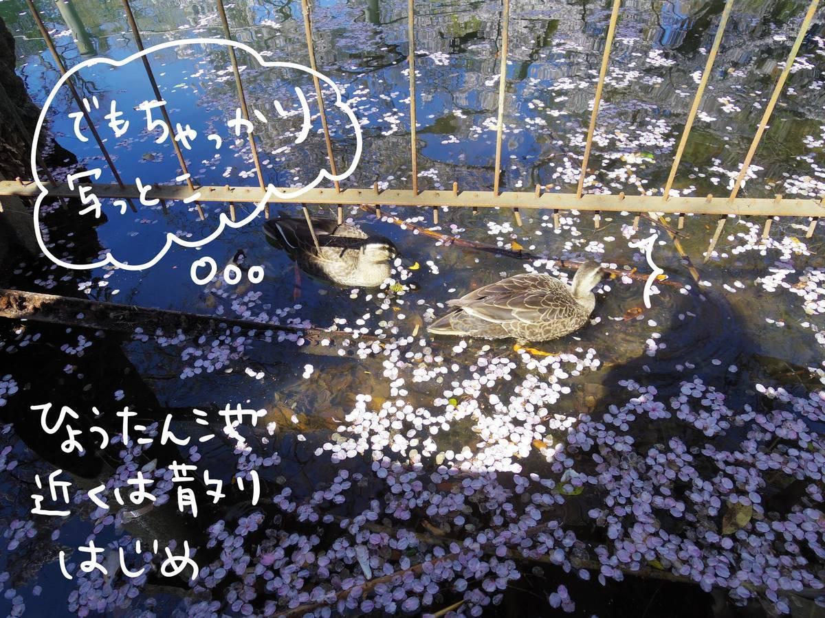 f:id:Fukuneko:20190401150946j:plain