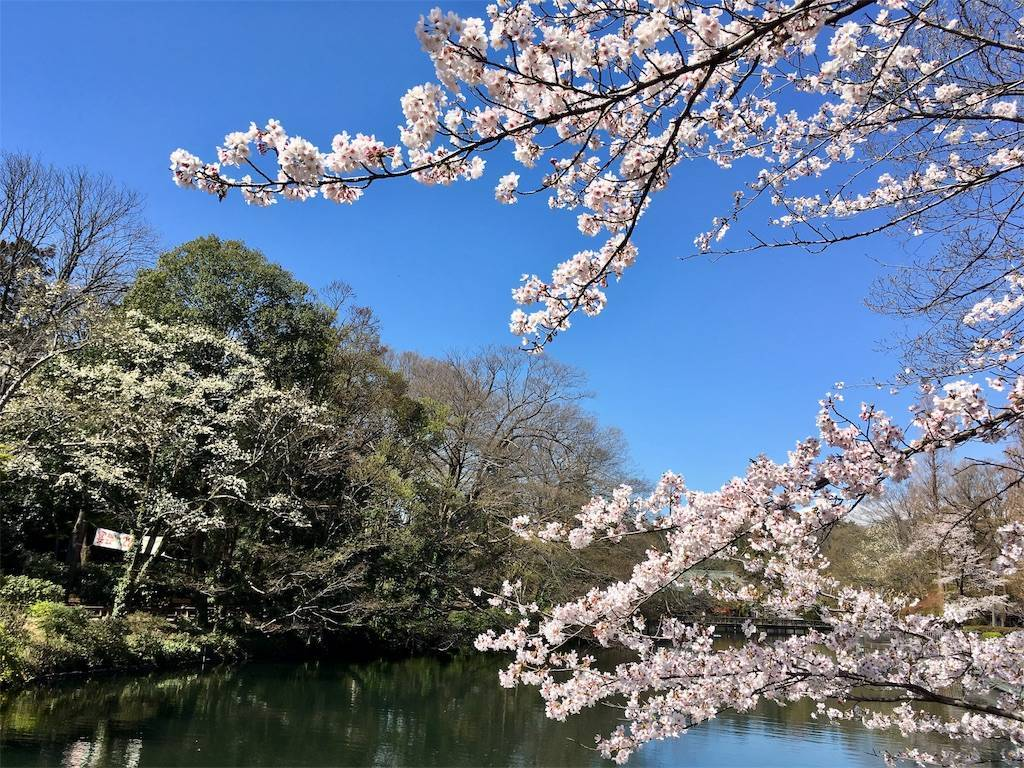 f:id:Fukuneko:20190401151715j:image