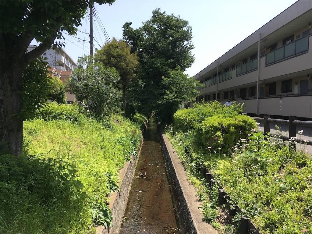 f:id:Fukuneko:20210505162318j:image