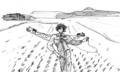 パチモク:田植えが終わったばかりの水田編