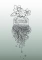 櫛の花(黒い髪)