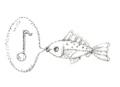 魚とオタマトーン1