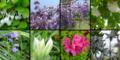 庭園で咲いていた花々