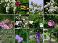 ギャラリー庭園で咲いていた花々
