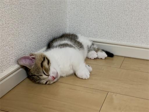f:id:Furukawake:20210517201329j:image