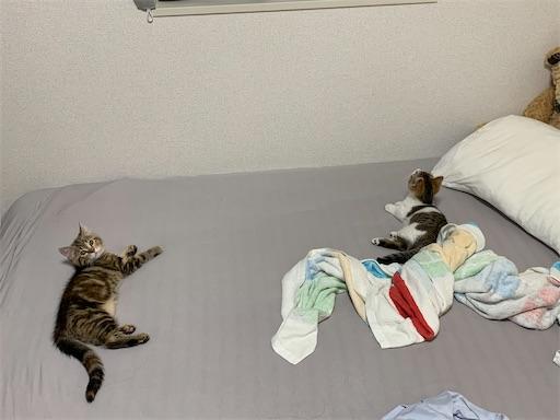 f:id:Furukawake:20210606222800j:image