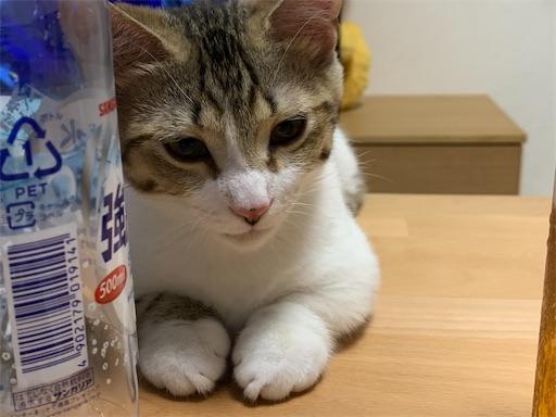 f:id:Furukawake:20210803132648j:image