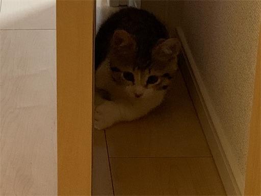 f:id:Furukawake:20210827081735j:image