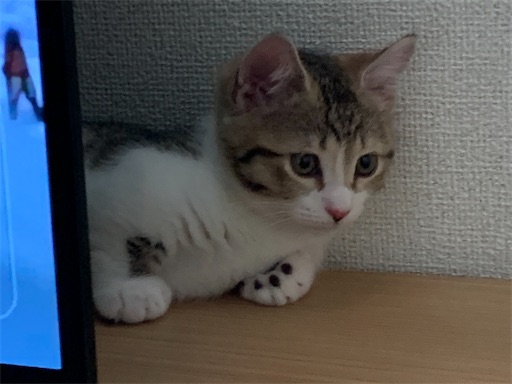 f:id:Furukawake:20210827091547j:image