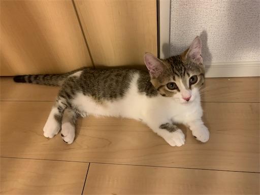 f:id:Furukawake:20210829160212j:image