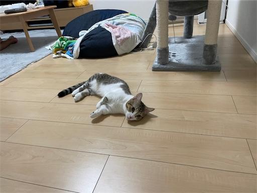 f:id:Furukawake:20211004101230j:image