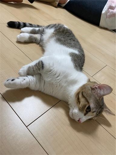 f:id:Furukawake:20211004101410j:image