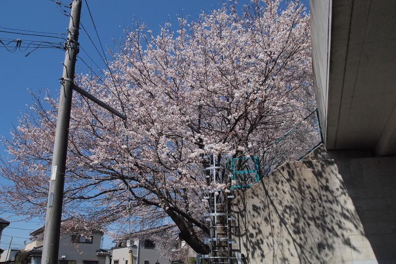 f:id:FutagawaNico:20190405221311j:plain