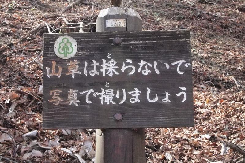 f:id:FutagawaNico:20190413225328j:plain