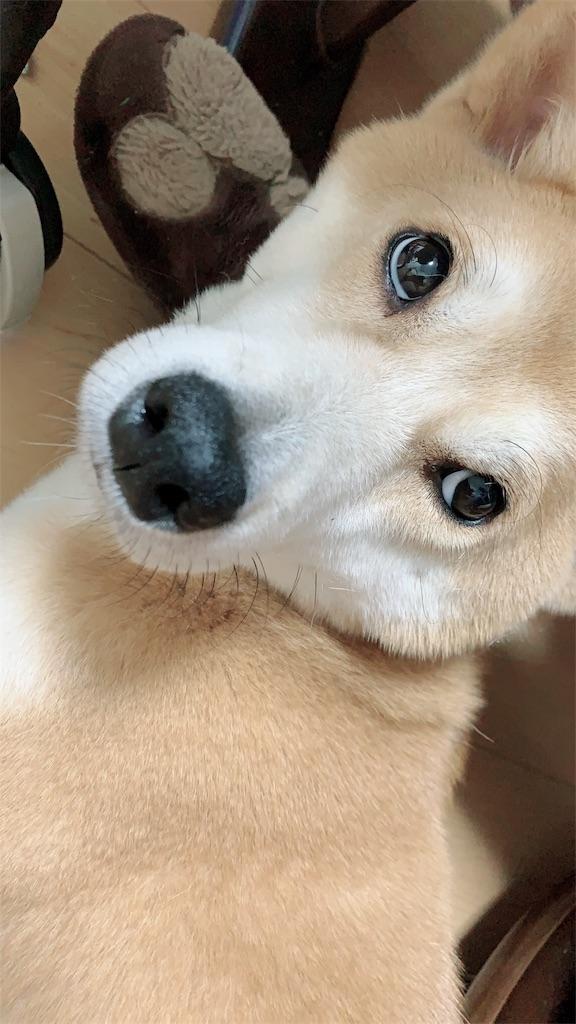 f:id:Futomenokachan:20190526102703j:image