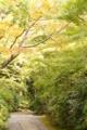 『京都新聞写真コンテスト 光降る木々 』