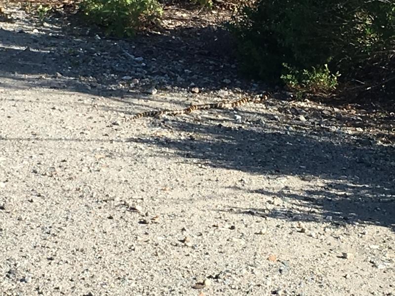 カリフォルニア アウトドア 自然 トレッキング