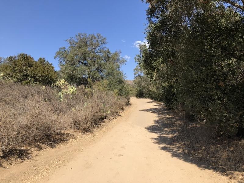 カリフォルニア 自然 マウンテンライオン