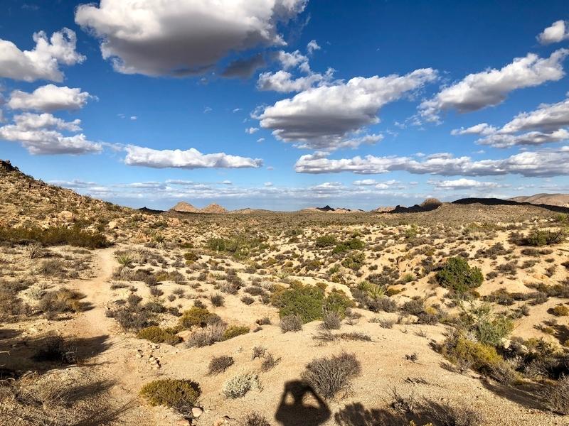カリフォルニア ジョシュアツリー アウトドア 自然
