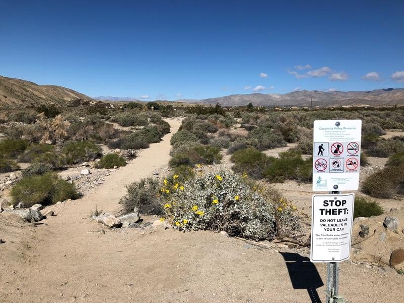カリフォルニア, サウザンドパームズ, コーチェラバレー, 砂漠, 開花