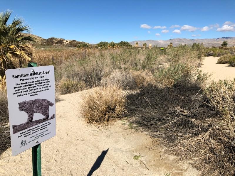 カリフォルニア, サウザンドパームズ, コーチェラバレー, 砂漠, ボブキャット