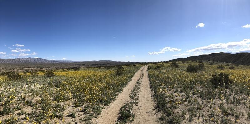 カリフォルニア サウザンドパームズ コーチェラバレー 砂漠 開花