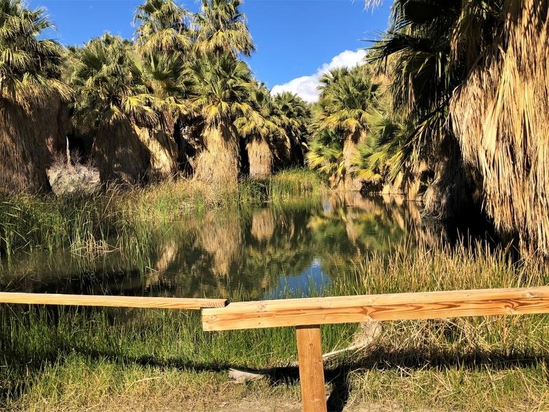 カリフォルニア サウザンドパームズ コーチェラバレー 砂漠 開花 オアシス