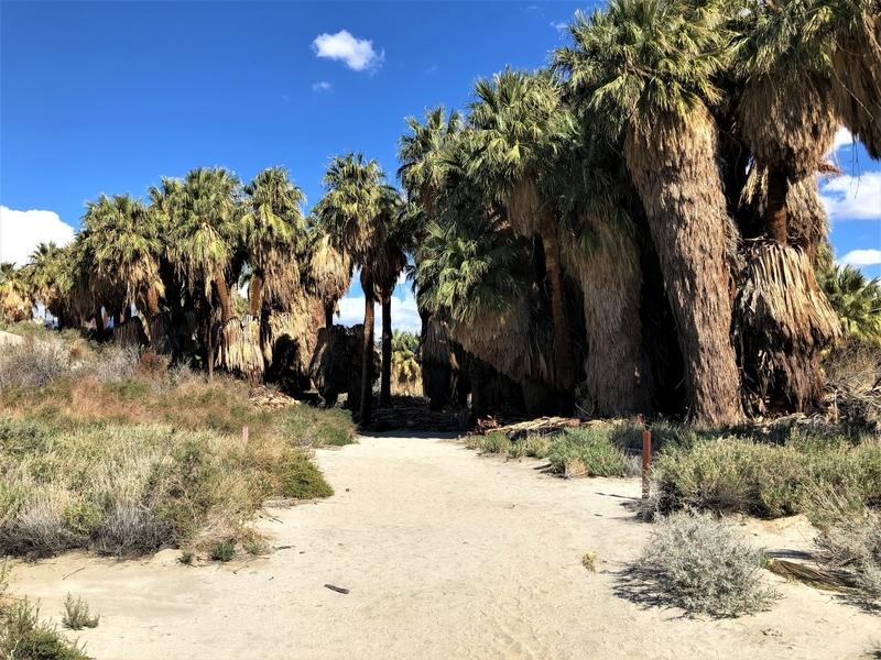 カリフォルニア サウザンドパームズ コーチェラバレー 砂漠 オアシス