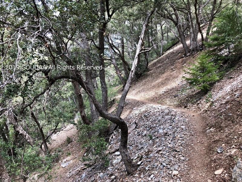 カリフォルニア マウント バルディ ベアー フラッツ トレッキング ハイキング