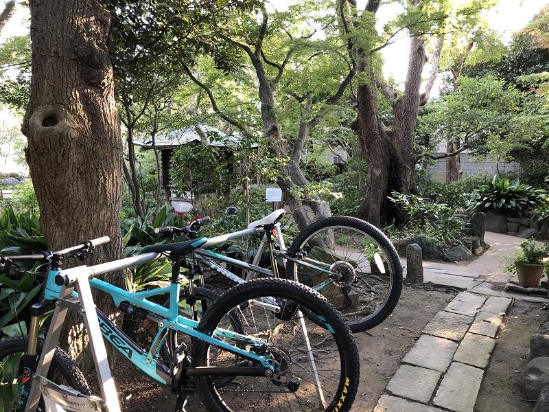 流山市 江戸川 サイクリング カフェ 杜のアトリエ黎明